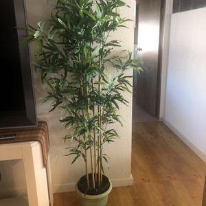 Plant From Ikea for Sale in Phoenix, AZ