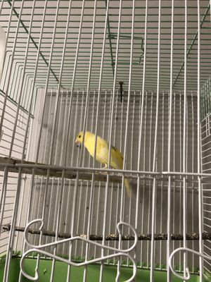 200 Bird cage for Sale in Ann Arbor, MI