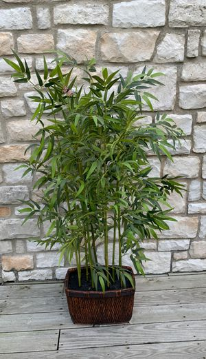 """62"""" ARTIFICIAL BAMBOO for Sale in Carlisle, PA"""