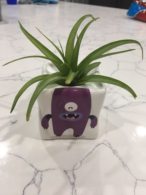 Purple DIY Air plant Earthling for Sale in Minneola, FL