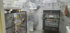 Bird Cages for Sale in Dearborn, MI