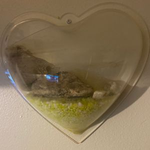 Heart shaped wall fish 🐠tank for Sale in Fond du Lac, WI