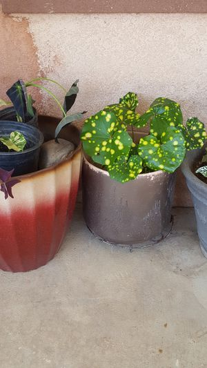 Pot with nice plants for Sale in Riverside, CA