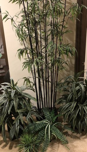 Artificial plants for Sale in Issaquah, WA