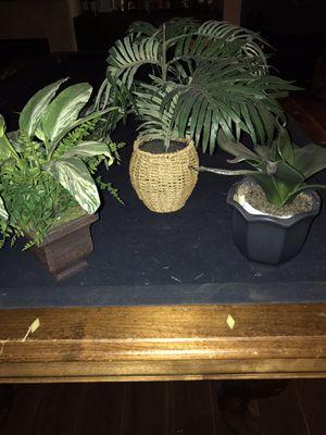 Fake plants for Sale in Menifee, CA