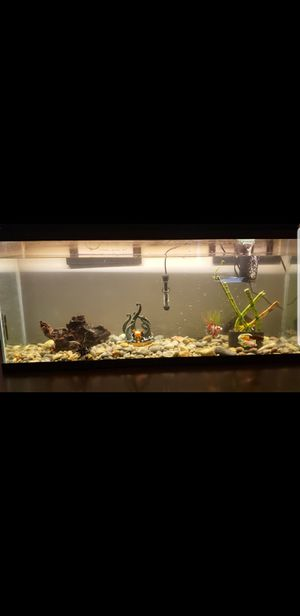 55gal fish tank for Sale in Joint Base Lewis-McChord, WA