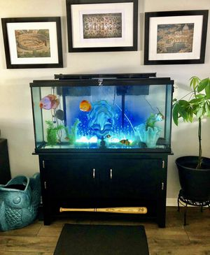 65 gal tank with fish, supplies ect.. for Sale in Salt Lake City, UT