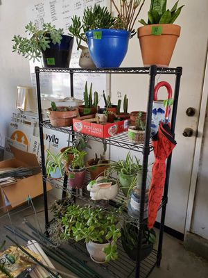 Plants - Plants - Plants- Large Selection - Moving Must Sell for Sale in Corona, CA