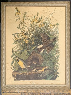 Antique Audubon Print for Sale in Portland, OR
