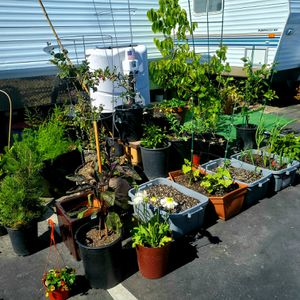Garden veggies, fruits, citrus trees starts, custom container beds. And much more for Sale in Encinitas, CA