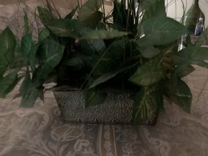 Plant with metal pot for Sale in Manassas, VA