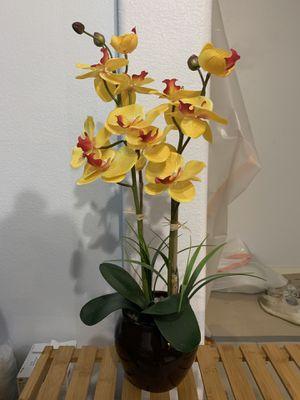Decor Plant for Sale in Dublin, CA