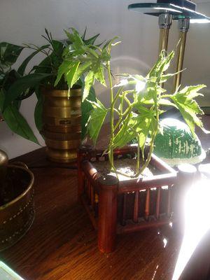Hippie Heaven up in smoke Fake pot plant for Sale in Hendersonville, TN