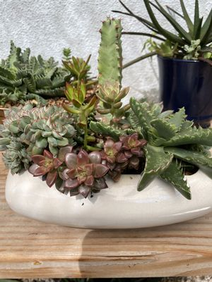 Succulent planter for Sale in Visalia, CA