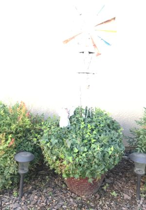 Wind mill pot and plant. 40.00 for Sale in Denair, CA
