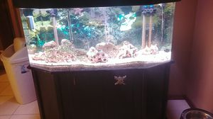 60 gallon saltwater acrylic aquarium for Sale in Shelby Charter Township, MI