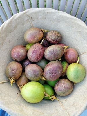 Passion fruits for Sale in Turlock, CA