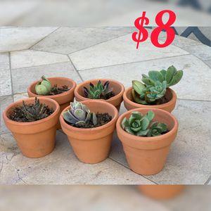 Cute terra cotta pots with succulents for Sale in Corona, CA