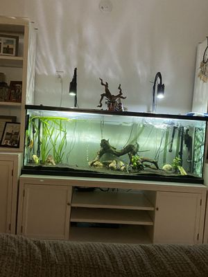 Fish tank for Sale in Riverside, CA