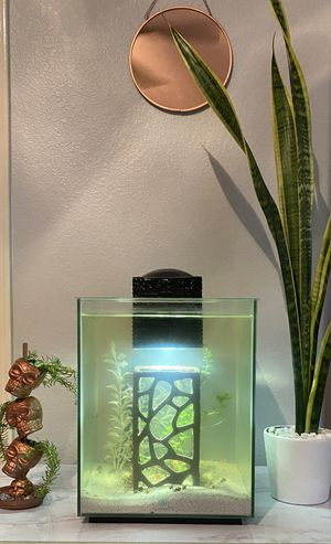 full fish tank set up (with fish and water supplies) for Sale in Dripping Springs, TX