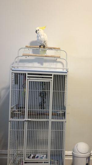 Cage for birds plus umbrella cockatoo for Sale