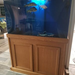 Acrylic Tanks For Sale And Fx6 Filter for Sale in Ruskin, FL