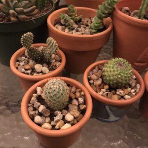 Cactus-Succulents for Sale in Orlando, FL