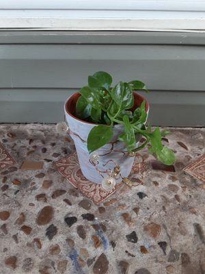 Succulent for Sale in Hurst, TX