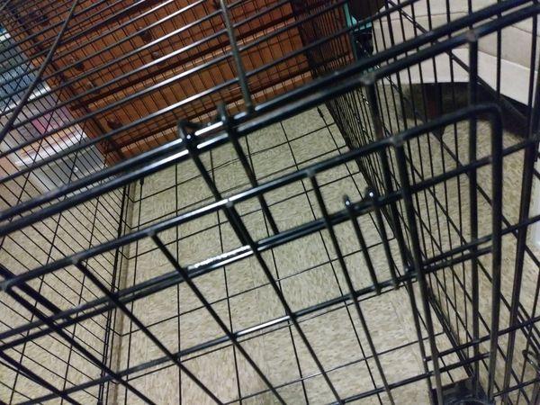Large folding multiple lock dog cage