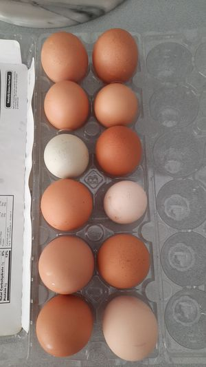 Fresh organic eggs for Sale in Vancouver, WA