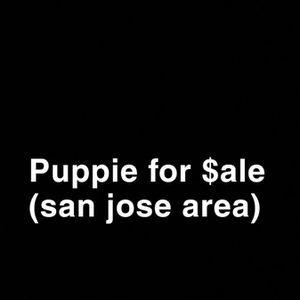 4 $ale for Sale in San Jose, CA