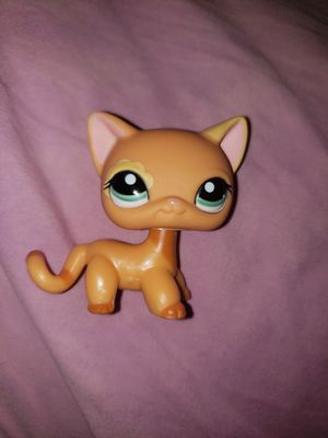 Littlest pet shop shorthair (SEND OFFERS NOT FOR FREE) for Sale in Cypress, TX