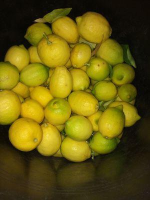 Organic lemons for Sale in Los Angeles, CA