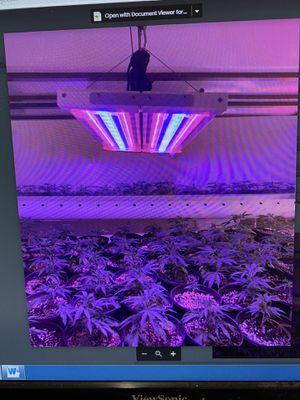 Grow light full spectrum for Sale in Glendale, CA