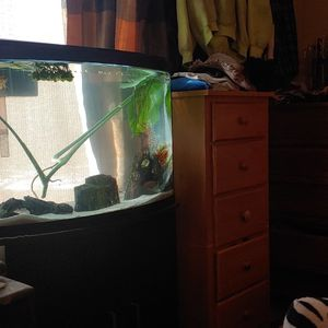 39 Gallon Bow Front Fish Tank for Sale in Vancouver, WA