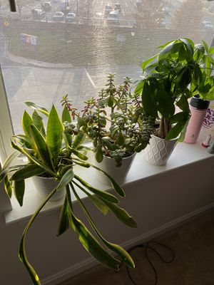 Real plants for Sale in Washington, DC