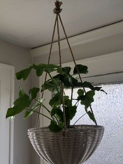 Hanging Basket Planters for Sale in Portland,  OR