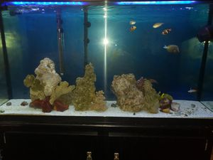 70g saltwater aquarium for Sale in Los Angeles, CA