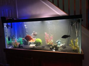 75 gallon fish tank w/ all you see and filters fish too your looking at an assortment of different species and breads of African Chilids and South Am for Sale in Annapolis, MD