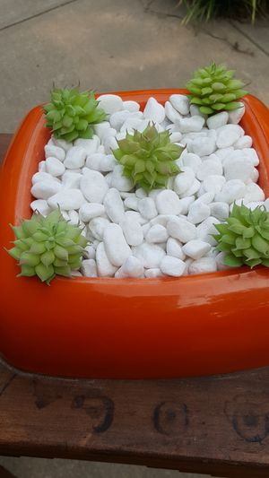 Orange plastic succulent tray with white stones for Sale in Lancaster, TX