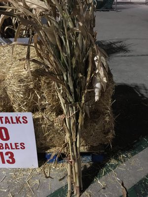 Corn Stalk for Sale in Los Angeles, CA