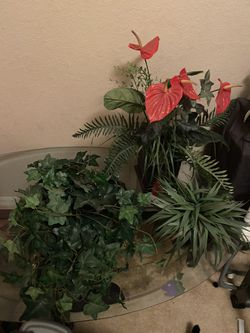 Fake Plants for Sale in Winter Haven,  FL