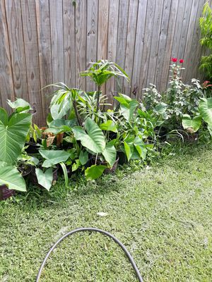House Plants for Sale in Houston, TX