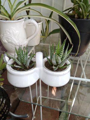 Suculentas for Sale in Colton, CA