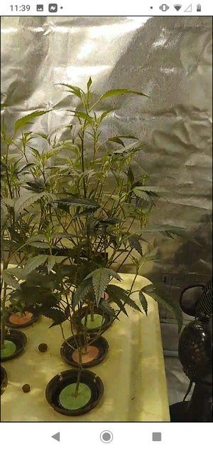 Plants for Sale in Henderson, NV