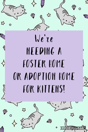 Free Kittens (MUST READ DESCRIPTION & VIEW PICTURES) for Sale in Tullahoma, TN
