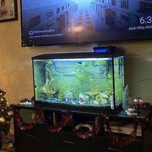 Aquarium for Sale in Placentia, CA