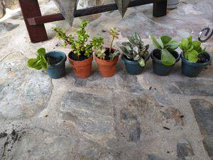 Succulents for Sale in Miramar, FL