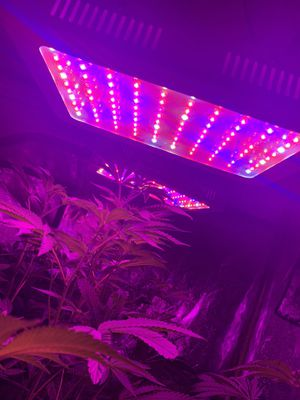 1000 w grow light for Sale in Beverly Hills, MI