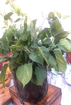 Fake plant for Sale in Riverside, CA